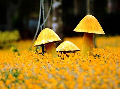 צהוב yellowצהוב yellow