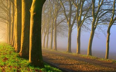 דרך עם ערפילים  דרך עם ערפילים  foggy-road-sunrise