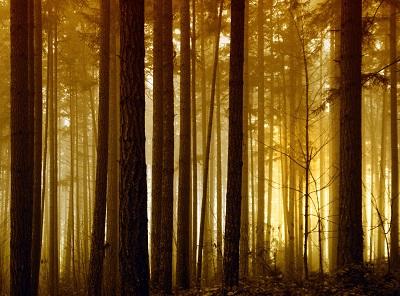 יער  forestיער  forest עצים