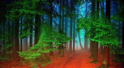 יער   forest   יער   forest   עצים