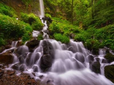 מפל    עציםמפל  יער קיץ forest waterfall summer