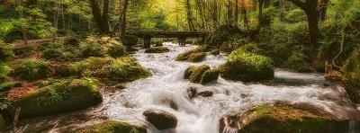 מפל מפל זרם יער  forest stream