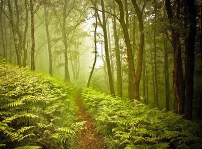 מעבר ביער  עצים  מפל זרם מעבר יער  forest path