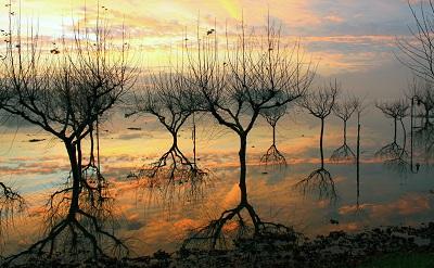השתקפותהשתקפות reflexos  עצים