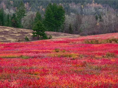 שדה אֻכְמָנִיותשדה אֻכְמָנִיות  תמונות של שדות צילומים
