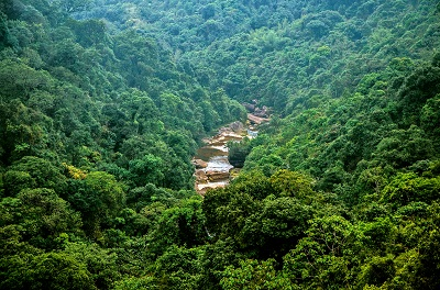 נהר בהודונהר בהודו -Lone_Oak_in_Saint_Bernard_Parish-Nature_Forests_Rivers_Cherrapunjee_Landscape_Meghalaya_India