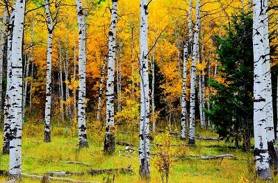 עצים -autumn_forest_trees_nature