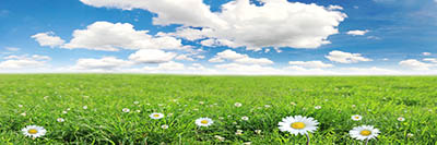 שמים  מעל שדה פרחיםשמים  מעל שדה פרחים