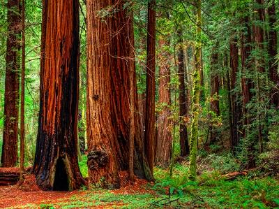 יער forest_trees_natureיער forest_trees_nature   עצים