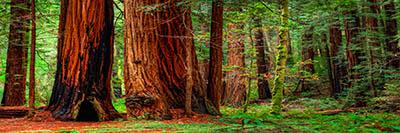 עצים עצים   forest_trees_nature