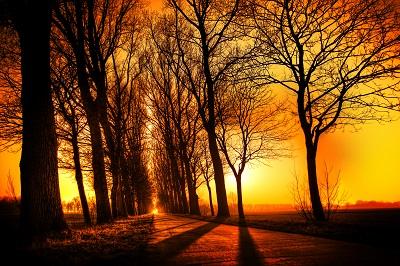 עצים שלכת שקיעה - עצים שלכת autumn_sunset_road_trees_landscape