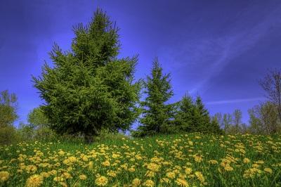 שדה פרחים ועץשדה פרחים ועץ