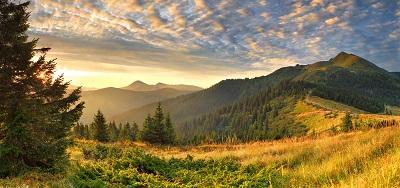 נוף  עצים יערות נוף  עצים יערות שקיעה -