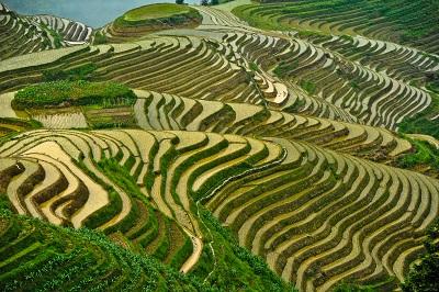 טרסות אורזטרסות אורז