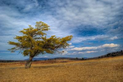 עץ ושדהעץ ושדה