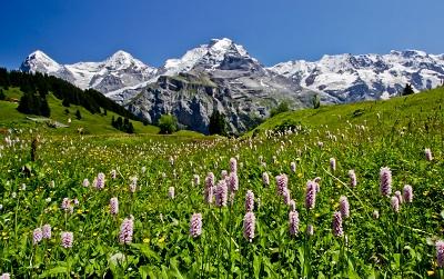 שוויץ שוויץ  _Bernese_Oberland_Switzerland