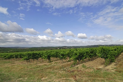 נוף _Vineyards-in-Limoux