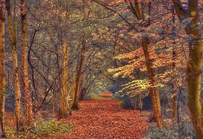 סתיו אדוםסתיו אדום --autumn_forest_trees_road_landscape