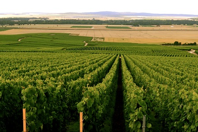 דרך היין דרך היין