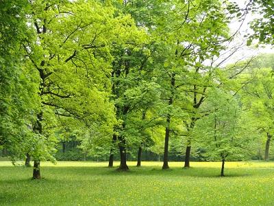 נוף  ליד מינכן  נוף  ליד מינכן  -Landscape,_Englischer_Garten,_Munich