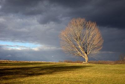 Farm  עץ בחוה-Farm  עץ בחוה  תמונות של שדות צילומים