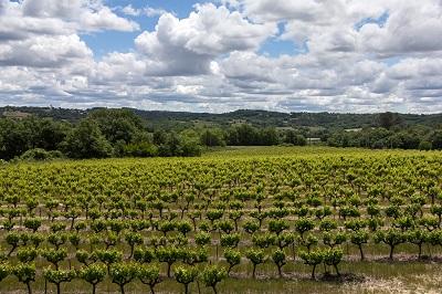 דרך הייןדרך היין  כרמים   תמונות של שדות צילומים