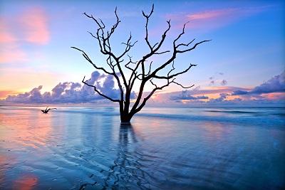 עץ בודד  עץ בודד  - now-i-am-free