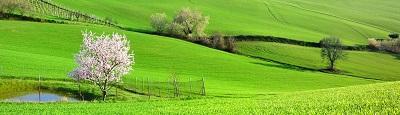 נוף כפרינוף כפרי