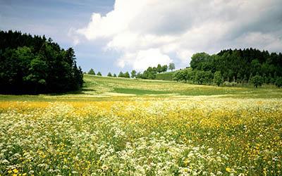 נוף  ירוקנוף  ירוק
