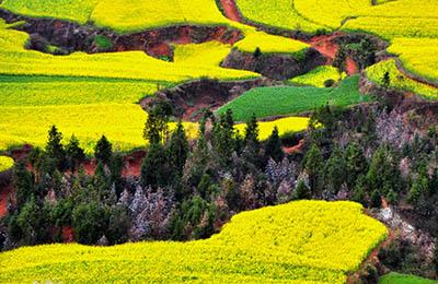 נוף  צבעוני   נוף  צבעוני   תמונות של שדות צילומים