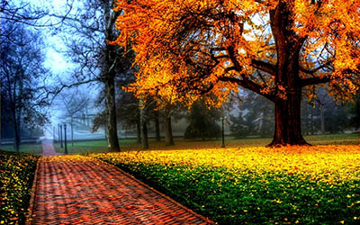 שבילשביל  _clouds_landscapes_nature_trees_multicolor_seasons_brilliant_parks_Nature_Environment_autumn