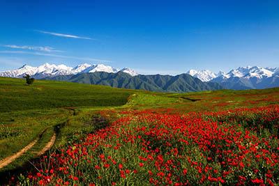 פרחים תמונות של שדות צילומים  נוף הרים ופרחי בר  Scenery_Mountains_Fields_Poppies_Grass_Trail_Nature_Flowers