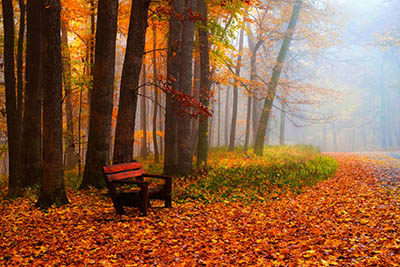 סתיוסתיו  autumn_path_nature_fall_bench_leaves_woods