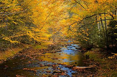 נוףנוף כפרי   GP-VIEW-3496_autumn_trees_forest_woods_nature_fall_river
