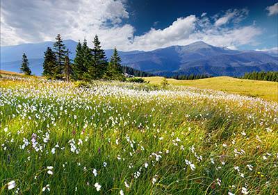 נוף   נוף  trees_flowers_mountains_clouds
