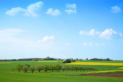 נוף כפריתמונות של שדות צילומים  כרמים  נוף כפרי  טוסקנה איטליה  fields trees italy road Tuscany