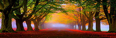 סתיו ערפיליסתיו ערפילי  red-leaves-and-fog-in-the-park-autumn-landscape