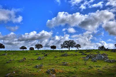 rocky field in spain  - ספרד rocky field in spain  ספרד  עצים שמיים שמים  נוף