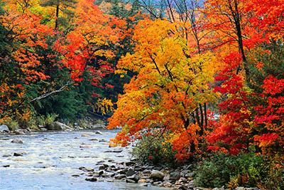 זרימה בשלכתזרימה בשלכת  עצים   מים  נהר נחל