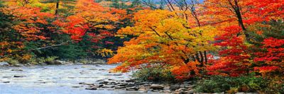 stream in autumn woods stream in autumn woods