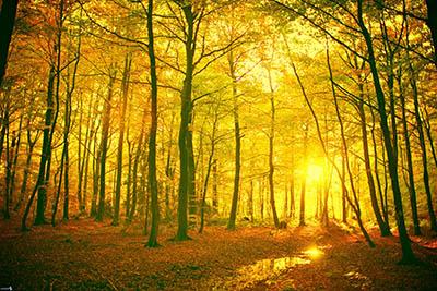 יער  יער   שקיעה    עצים _jaunes-foret-dautomne,-couchage-de-soleil-dans-la-foret,-feuilles