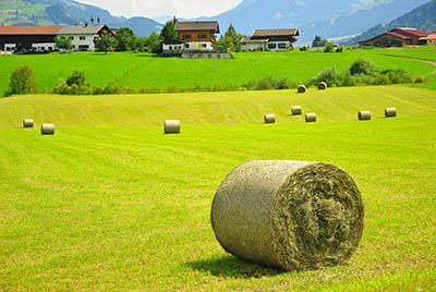 Austria field  - אוסטריה_Austria_field_hay_house_landscape