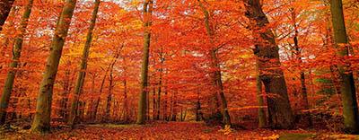 יער אדמדםיער אדמדם  עצים