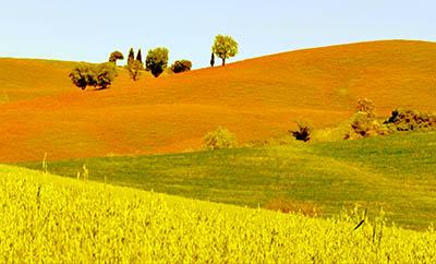 Toscanaתמונות של שדות צילומים   Toscana