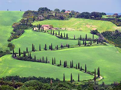 Toscana Italia  Dorcia תמונות של שדות צילומים  Toscana Italia  Dorcia   עצים  איטליה טוסקנה
