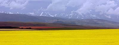שדה צהובשדה צהוב