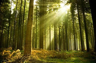יעריער  עצים