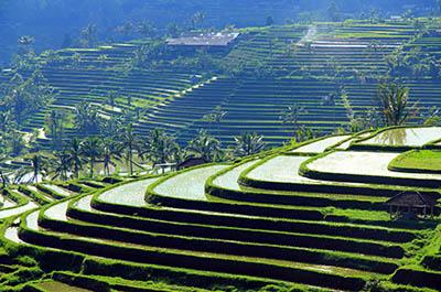 טרסות אורז  - באליטרסות אורז  - באלי    תמונות של שדות צילומים