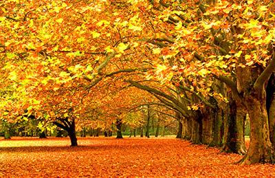 עצים בסתיועצים בסתיו