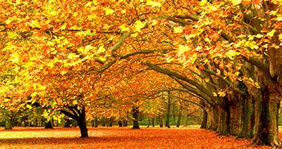 עצים בסתיו עצים בסתיו  autumn-trees